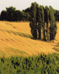 Art Classics Tuscan Grain