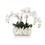 Selenite Orchids