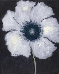 Art Classics Poppy #2