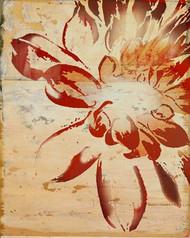 Art Classics Orange Dewy Bloom