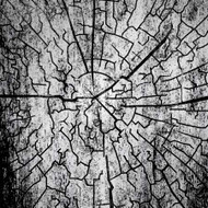 Art Classics Tree Ring 2