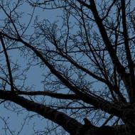 Art Classics Twilight Trees Blue Left