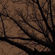 Art Classics Twilight Trees Mushroom Left