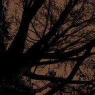 Art Classics Twilight Trees Mushroom Right