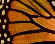 Art Classics Monarch II