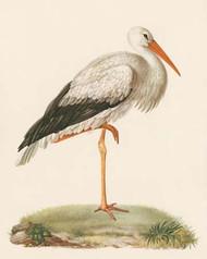 Art Classics Storck