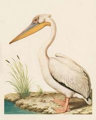 Art Classics Pelican