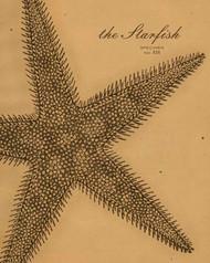 Art Classics Starfish Etching