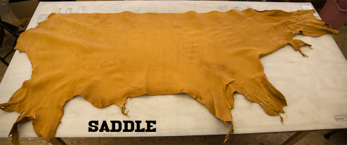 Saddle Buffalo