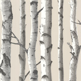 Tuxbury Beige Birch Tree Wallpaper