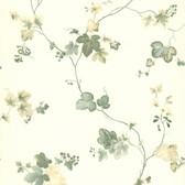 Ivy Green Ivy