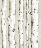 Birch & Sparrow 3118-12601 - Pioneer Birch Tree Wallpaper Off White