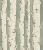 Birch & Sparrow 3118-12603 - Pioneer Birch Tree Wallpaper Sage