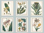 Ashford Toiles AF1930 - Botany Wallpaper Blue