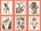 AF1931-Ashford Toiles Botany Wallpaper