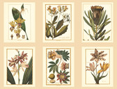 AF1932-Ashford Toiles Botany Wallpaper