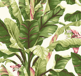 Ashford House AT7067 - Tropics Banana Leaf Wallpaper Cream