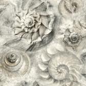 Coastal Calm CM3346 - Opulent Shell Wallpaper Gray