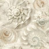 Coastal Calm CM3347 - Opulent Shell Wallpaper Stone