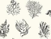 Coastal Calm CM3357 - Seaweed Wallpaper Oyster