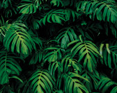 WALS0436 - Forest Plant Wall Mural