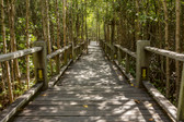 MS-5-0059 - Mangrove Forest Wall Mural