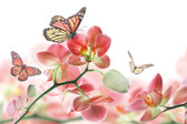 MS-5-0146 - Orchids and Butterfly Wall Mural