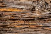 MS-5-0159 - Tree Bark Wall Mural