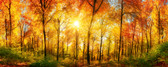 MP-2-0067 - Sunny Forest Wall Mural