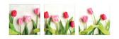 WPFA3773 - Hello Tulips 3D Foam Wall Art