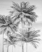 X4-1019 - Overcast Palm Wall Mural