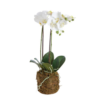 White Drop In Orchid - Medium