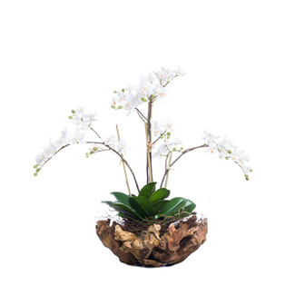 White Mini Phalaenopsis In Small Wood Bowl