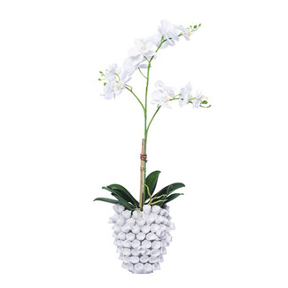 White Mini Phalaenopsis in White Barnacle Vase