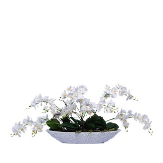 White Wild Mini Phalaenopsis In Oval Bump Bowl