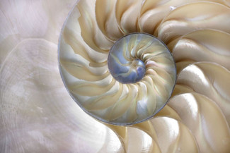 Inner Workings of a Conch