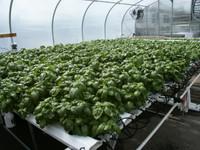 American Hydroponics 2012HL Complete System - Lettuce AH93075HF