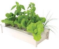 Hydrofarm Salad Box Hydroponic Salad Garden Kit 4/cs GCSB