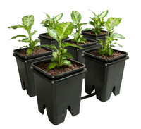 Active Aqua Grow Flow 5-Gal Expansion Kit 3/4 6 pot, 5 Gal GFOE3