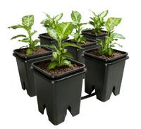 Active Aqua Grow Flow 5-Gal Expansion Kit 3/4 6 pot, 5 Gal GFOE3