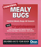 Orcon Cryptolaemus Mail-Back, pack of 5 ORCM