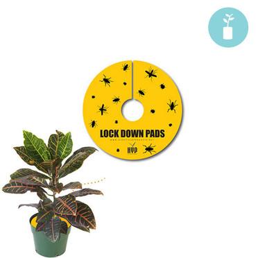 Lock Down Pads 6 8pcs
