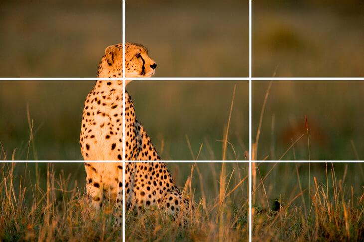 framing wildlife photographs