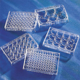 Costar(TM) Round Bottom Cell Culture Plates