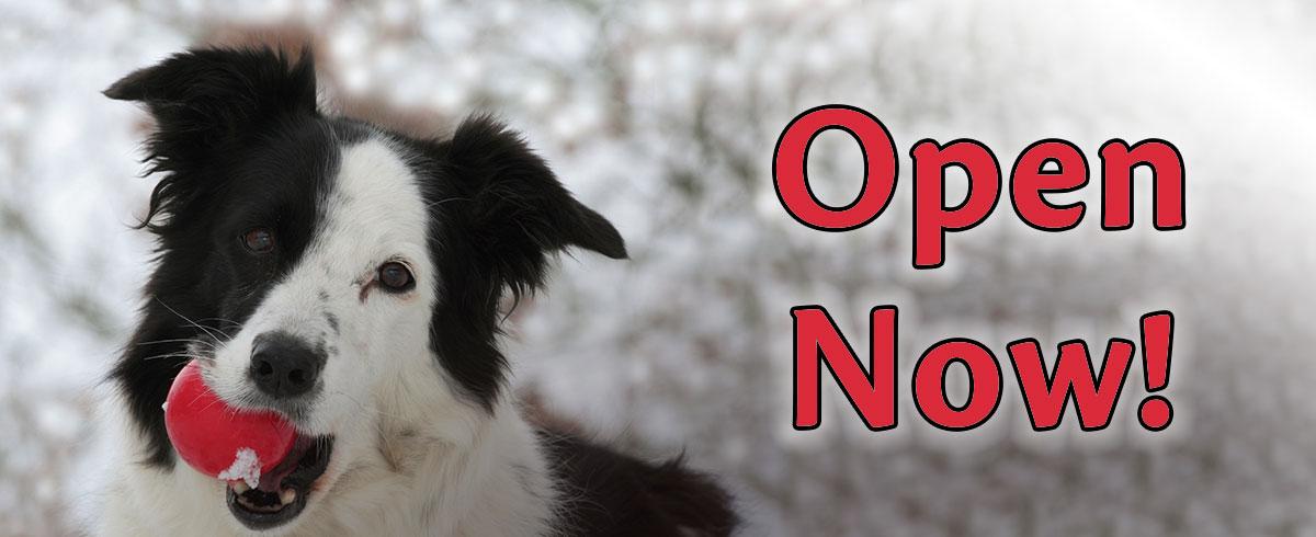 Open Now Livingston