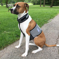 Cooler Dog Cooling Vest and Collar