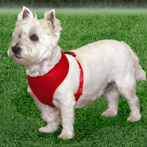 Comfort Soft Harnesses