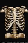 Children's Skeleton T Shirt