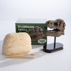 Dinosaur Skull Kit