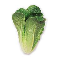 Lettuce - Baby Cos